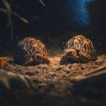 2 żółwie